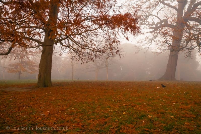 Autumn Colours in the Mist