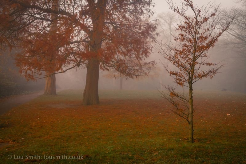 Wild, Misty Autumn