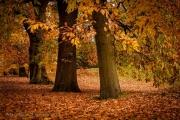 Autumn in Greenwich Park
