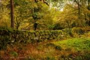 Dartmoor Lane in Autumn