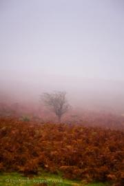Ancient Tree in the Dartmoor Landscape