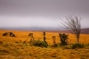 Autumn Colours Fill the Empty Dartmoor Land