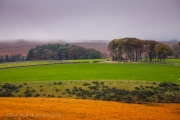 Misty Autumn Day in Dartmoor