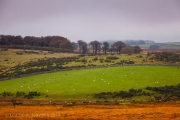 The Colours of the Dartmoor Landcape at Fall