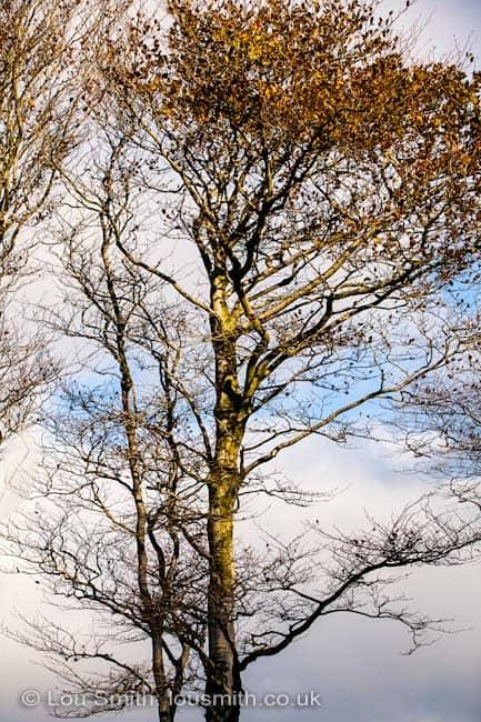 Autum in the Dartmoor Landscape