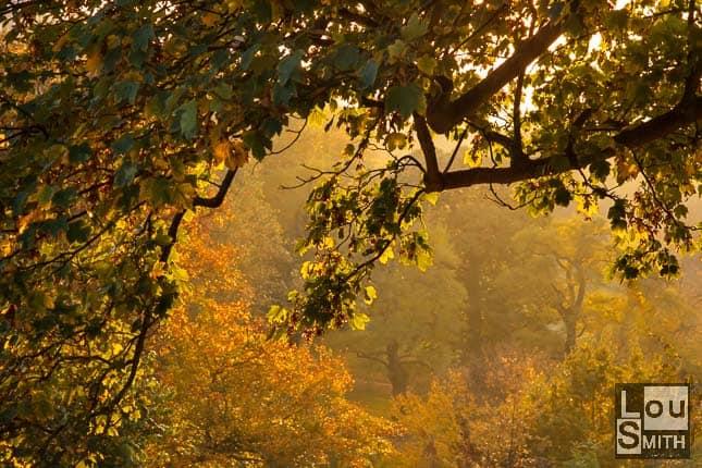 Greenwich Park at Autumn