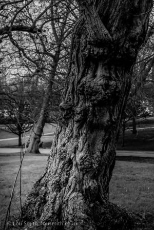 Ancient Trees in Greenwich Park